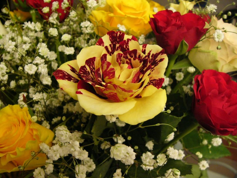 Red And Yellow Flowers Meaning Wajiflower