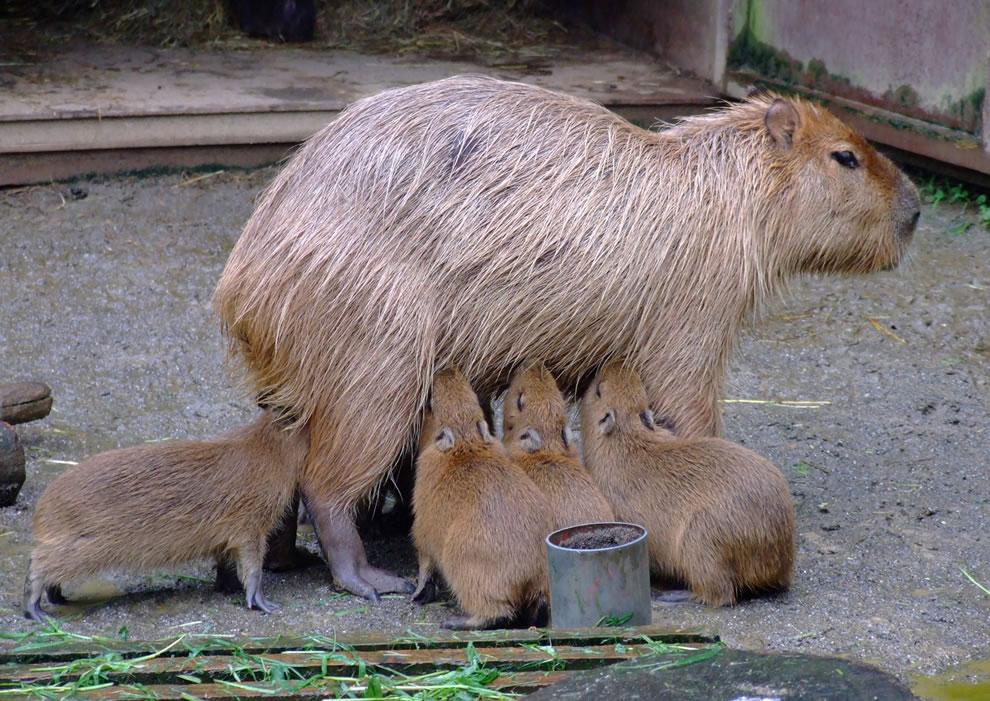 Mom, moom, mooom, moooom