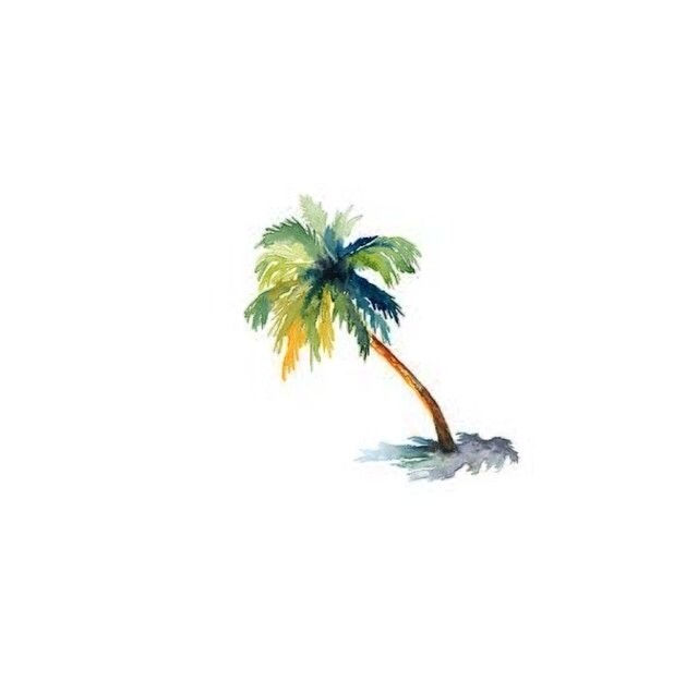 Tropical Palm Tree Pictures Photos And Images For