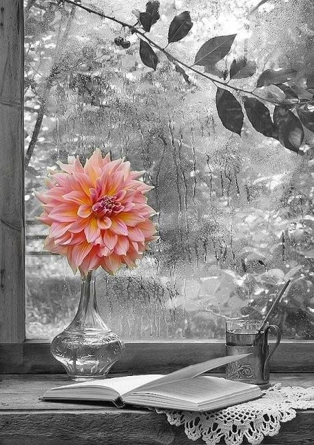 Rain Fall On Flowers Wallpaper Beauty In The Rain Pictures Photos And Images For