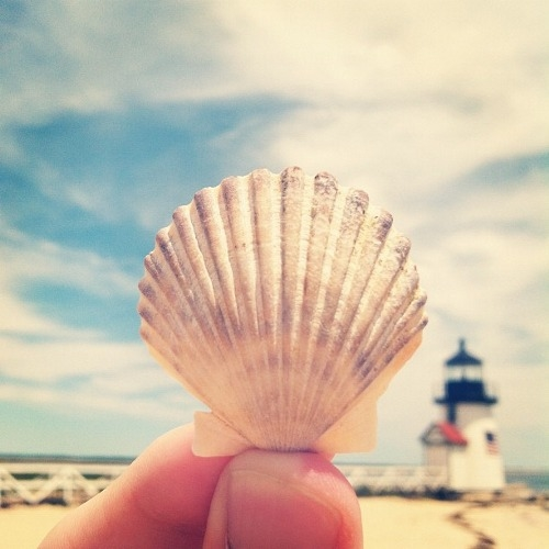 Single Seashell Pictures Photos And Images For Facebook