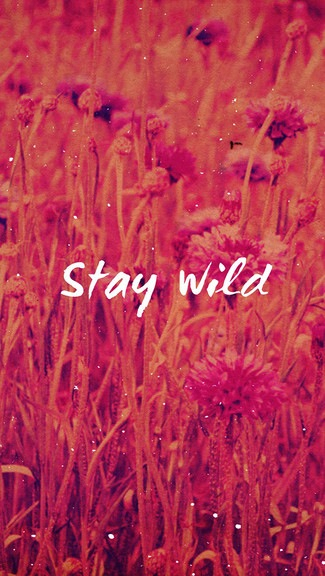 Cute Valentinesday Wallpaper Stay Wild Pictures Photos And Images For Facebook