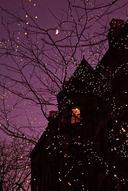 Dark Cozy Girl City Wallpaper Halloween Tree Lights Pictures Photos And Images For