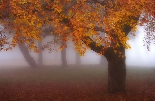 Thanksgiving Fall Wallpaper Foggy Autumn Pictures Photos And Images For Facebook