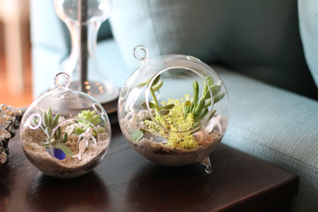 Cute St Patricks Day Wallpaper Succulent Sea Terrarium Pictures Photos And Images For