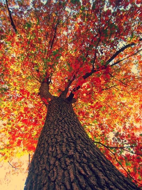 Cute Background Wallpaper For Computer Christmas Lights Hd Looking Up At Fall Tree Pictures Photos And Images For