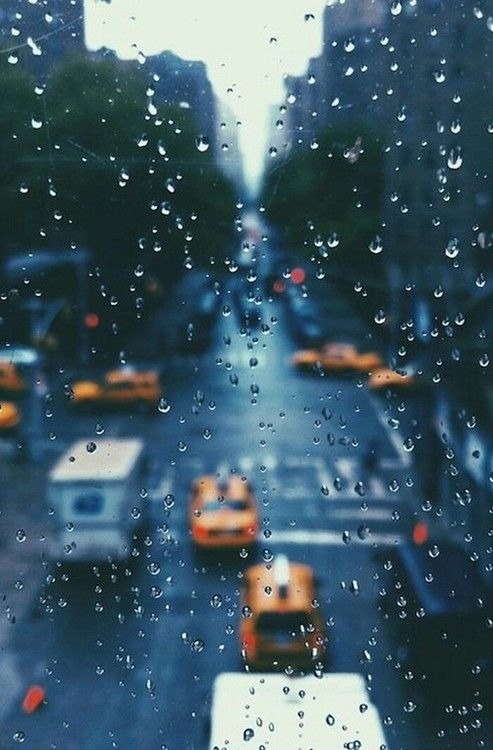 Rain Fall On Flowers Wallpaper Rain Drops On The Window Pictures Photos And Images For