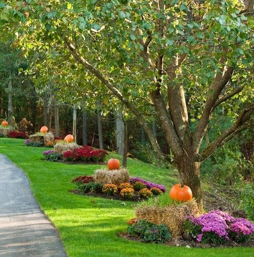 beautiful fall landscaping
