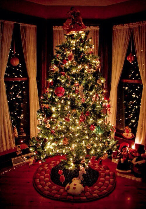 Christmas Tree At Night Pictures Photos And Images For