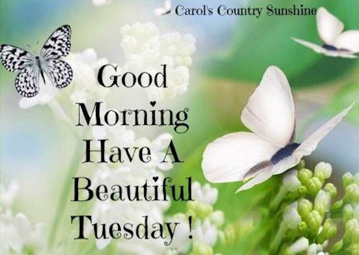 Good Morning Happy Tuesday Pictures Photos And Images