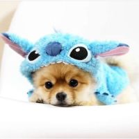 Dog In Costume Pictures, Photos, and Images for Facebook ...