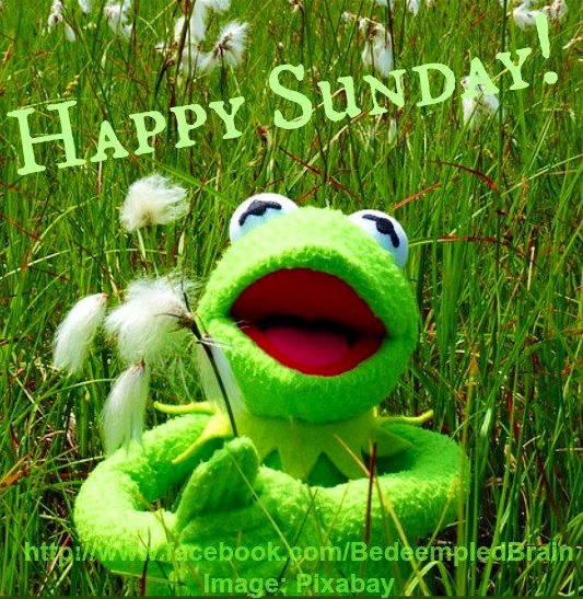 Kermit Happy Sunday Pictures Photos And Images For