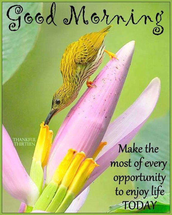 good morning make the