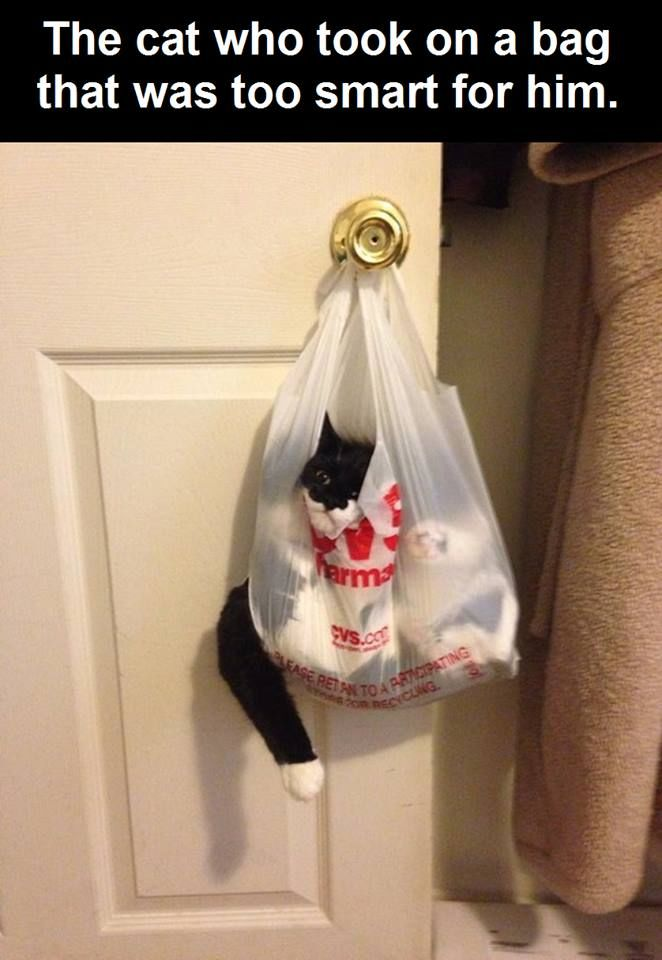 Cat Stuck In A Bag Pictures Photos and Images for