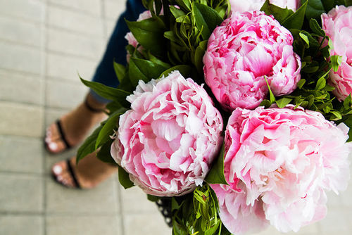 Beautiful Pink Peonies Pictures Photos And Images For