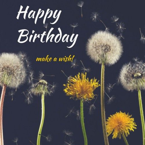Happy Birthday Make A Wish Pictures Photos And Images For Facebook Tumblr Pinterest And Twitter