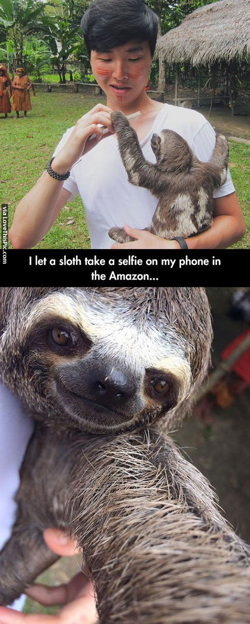 Cute Alpaca Wallpaper Sloth Selfie Pictures Photos And Images For Facebook