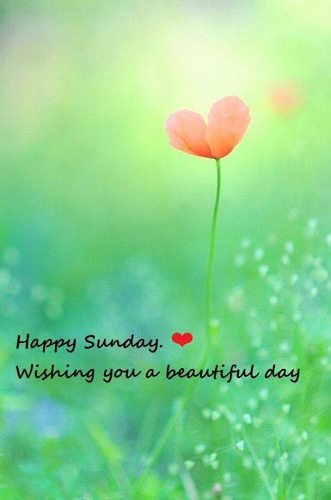 Happy Sunday Wishing You A Beautiful Day Pictures Photos