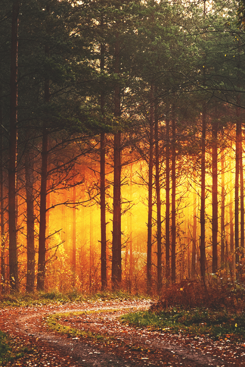Wallpaper Quote About Life Sunset Forest Pictures Photos And Images For Facebook