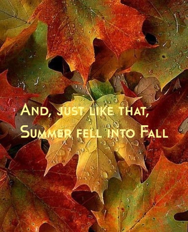 Fall Blessings Wallpaper And Just Like That Summer Fell Into Fall Pictures Photos