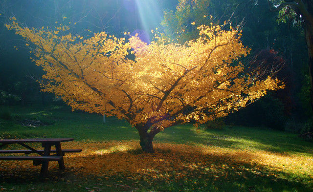 Cute 4th Of July Wallpaper Yellow Tree In The Fall Pictures Photos And Images For