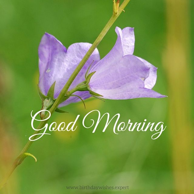 Good Morning Quotes Hindi Wallpaper Good Morning Image With Purple Flowers Pictures Photos