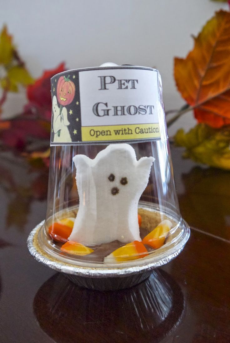 Cute DIY Pet Ghost Peep Pictures Photos and Images for
