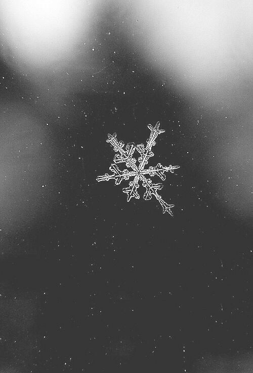Winter Wonderland Iphone Wallpaper Icy Winter Snowflake Pictures Photos And Images For