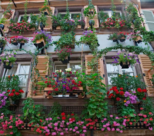 Flowers Building In France And