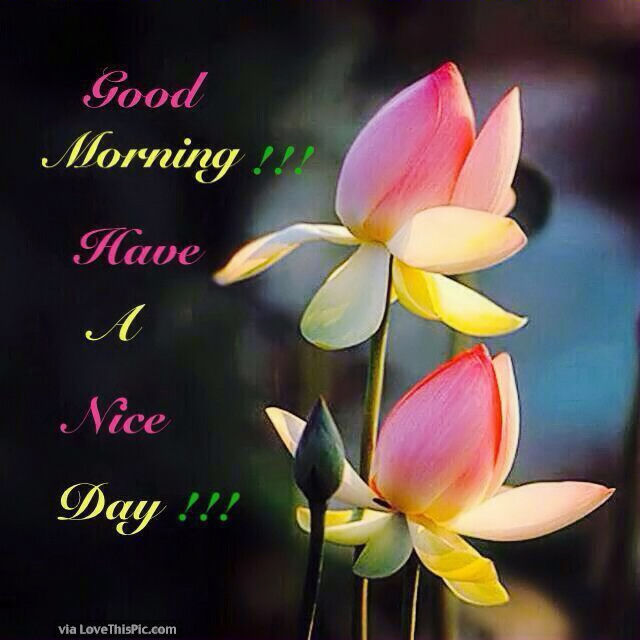 good morning flowers have