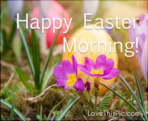 Happy Easter Morning Pictures Photos and Images for