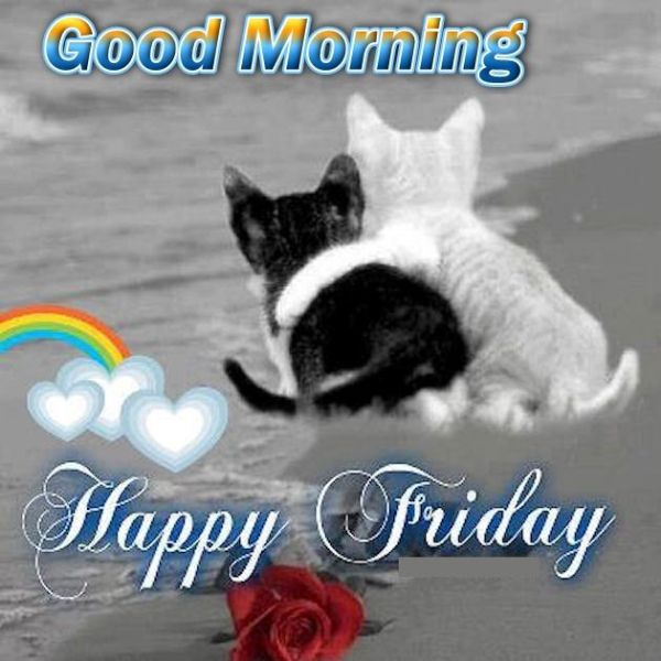 Image result for have a happy friday