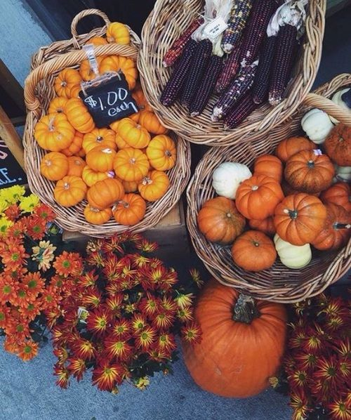 Fall Flowers And Pumpkins Wallpaper Pumpkins Amp Corn On The Cob Pictures Photos And Images