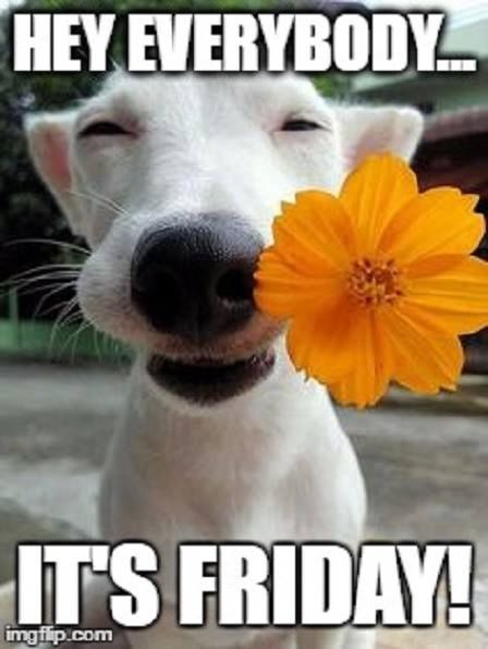 Friday Memes Funny Its Morning Good