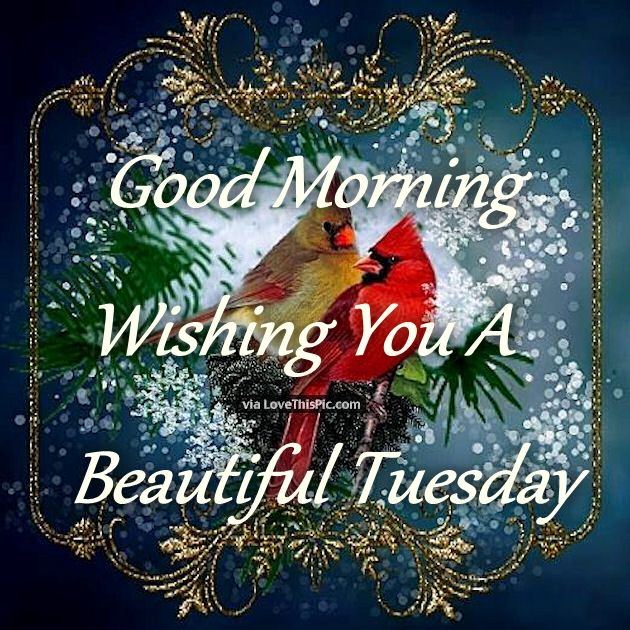 Good Morning Wishing You A Beautiful Tuesday Pictures
