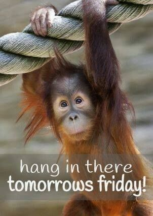 Hang In There Tomorrows Friday! Pictures Photos and