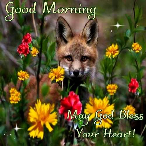 Good Morning May God Bless Your Heart Pictures Photos