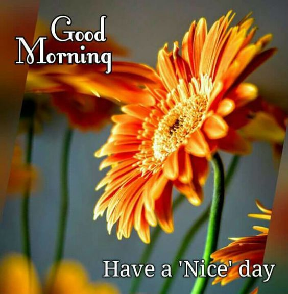 good morning have a