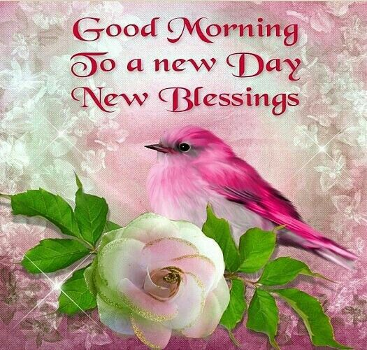 Good Afternoon Cute Wallpaper Good Morning To A New Day New Blessings Pictures Photos