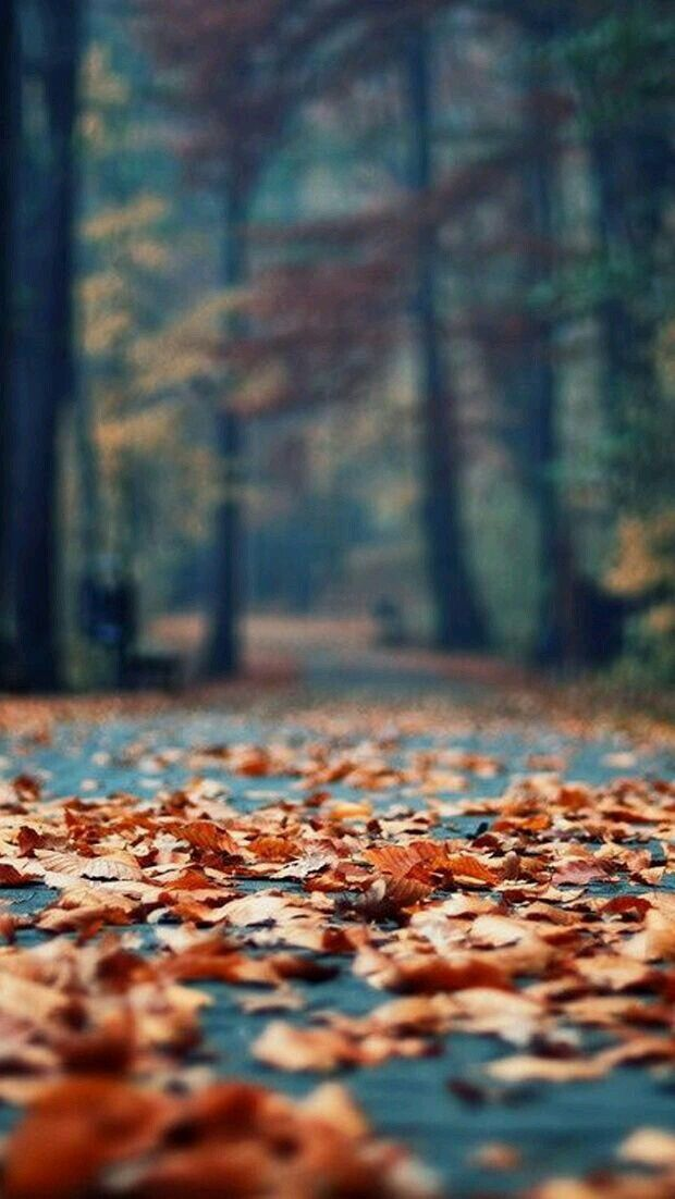 Facebook Wallpaper Fall Colors Crispy Autumn Leaves Pictures Photos And Images For