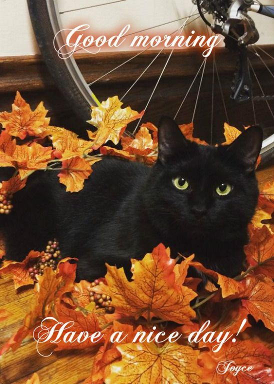 Cute Thanksgiving Wallpaper Cat Good Morning Have A Nice Day Pictures Photos And Images