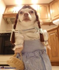 Dorothy Dog Costume Pictures, Photos, and Images for