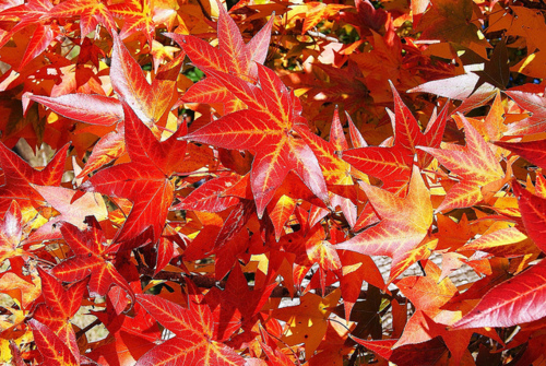 Wallpapers For Desktop Fall Colors Red Autumn Leaves Pictures Photos And Images For