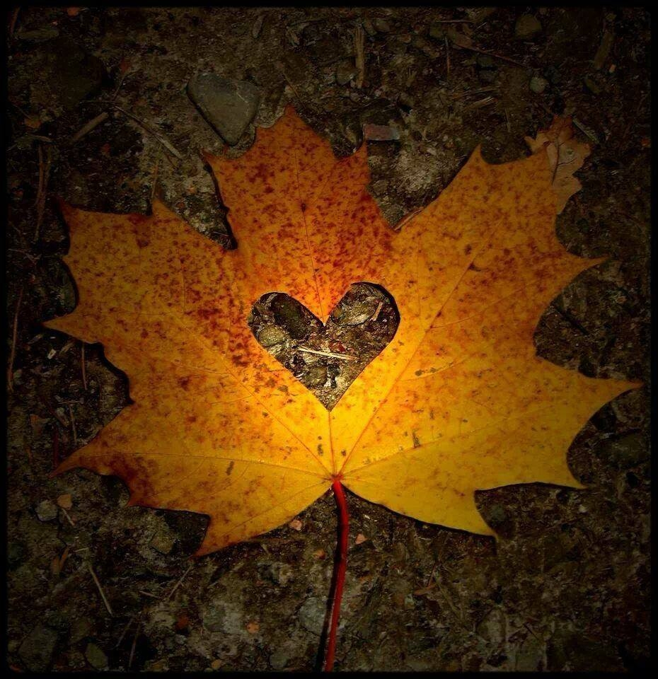 autumn leaf heart pictures