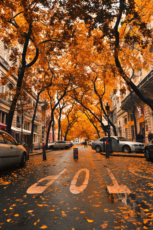 Fall In New England Wallpaper Autumn City Street Pictures Photos And Images For