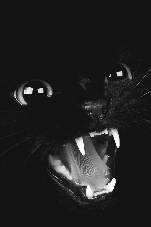 Zedge Wallpapers Cute Girl Black Cat Meow Pictures Photos And Images For Facebook