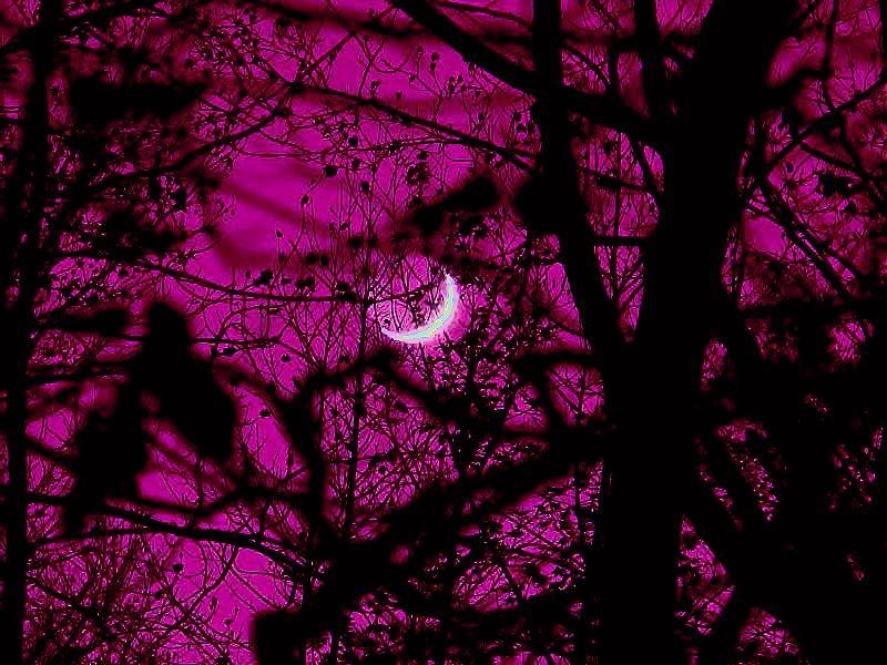 Funny Valentines Day Quotes Wallpapers Pink Night Moon Gaze Pictures Photos And Images For