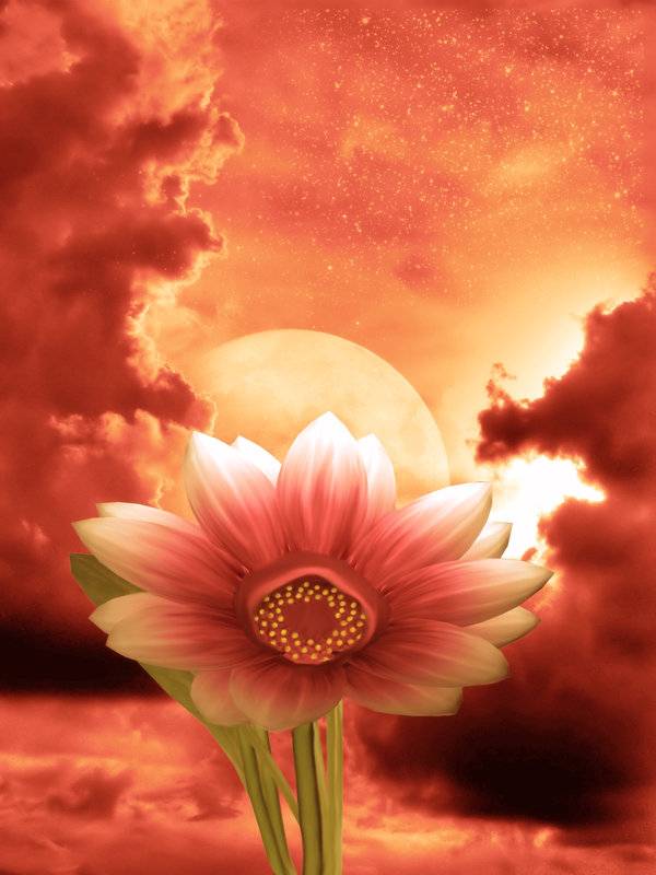 Animated Thanksgiving Wallpaper Fantasy Flower Pictures Photos And Images For Facebook