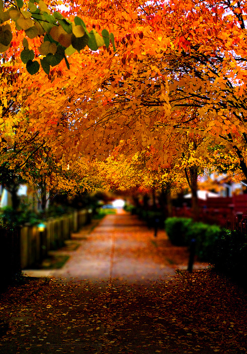 Orange Autumn Trees Pictures Photos And Images For