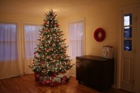 Living Room Christmas Tree Pictures, Photos, and Images ...